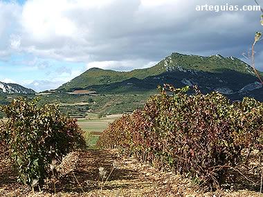 Los viñedos forman parte del paisaje de esta comarca